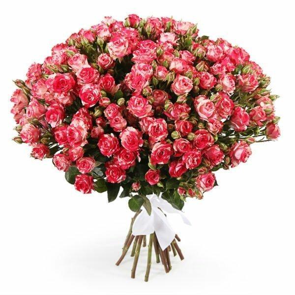 Букеты кустовые розы фото, авито энгельс цветы комнатные