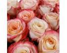 Количество цветов:: 15