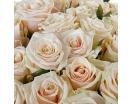 Количество цветов:: 35