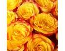 Количество цветов:: 101