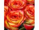 Количество цветов:: 25