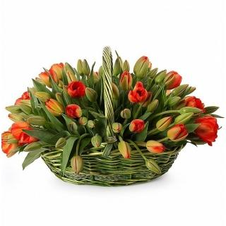101 Красный Тюльпан в Корзине