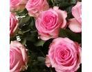 101 Роза «Свит Юник» в Корзине