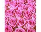 251 Роза «Аква» в Корзине