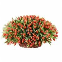 351 Красный Тюльпан в Корзине