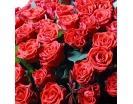 365 Роз «Эль Торо» в Корзине