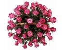 51 Роза «Дип Перпл» в Корзине