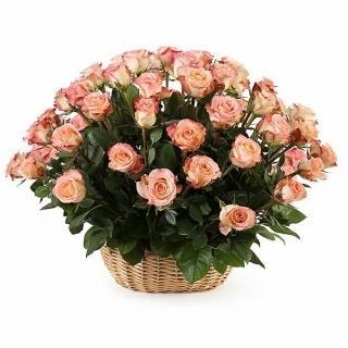 51 Роза «Дуэт Классик» в Корзине
