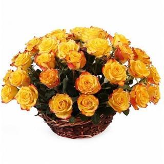 51 Роза «Хай Еллоу» в Корзине