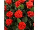 51 Роза «Эль Торо» в Корзине