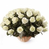 51 Роза «Мондиаль» в Корзине