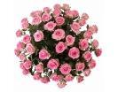 51 Роза «Свит Юник» в Корзине