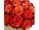 Розы «Хай Мэджик» в шляпной коробке