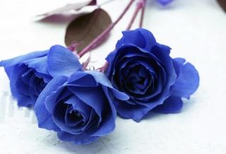 Синие Розы - мечта... Или реальность?