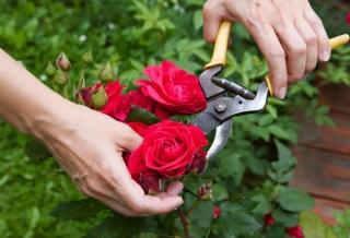 Как определить свежесть срезанных цветов